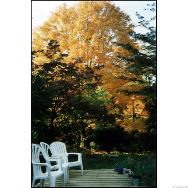 Autumn scenes from the grounds of OMLINK - the Studio for Yoga Synthesis.